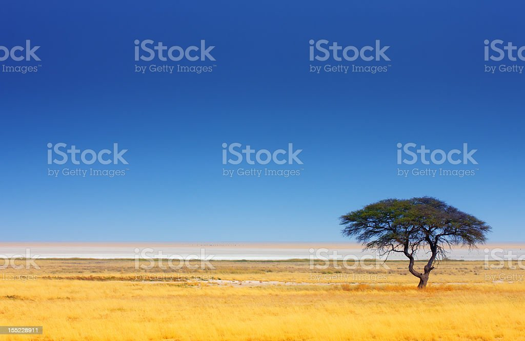 African landscape with single tree royalty-free stock photo