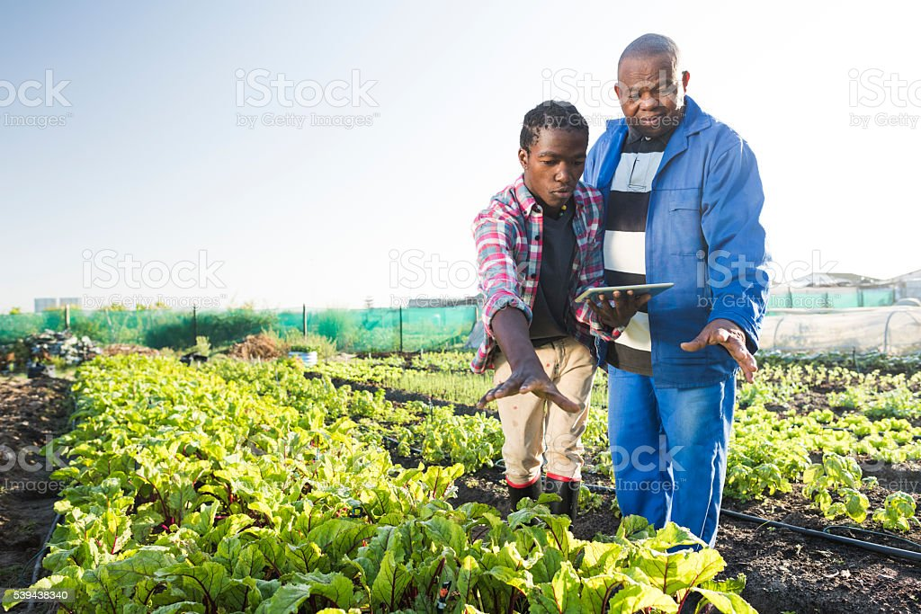 African males using tablet in vegetable garden stock photo