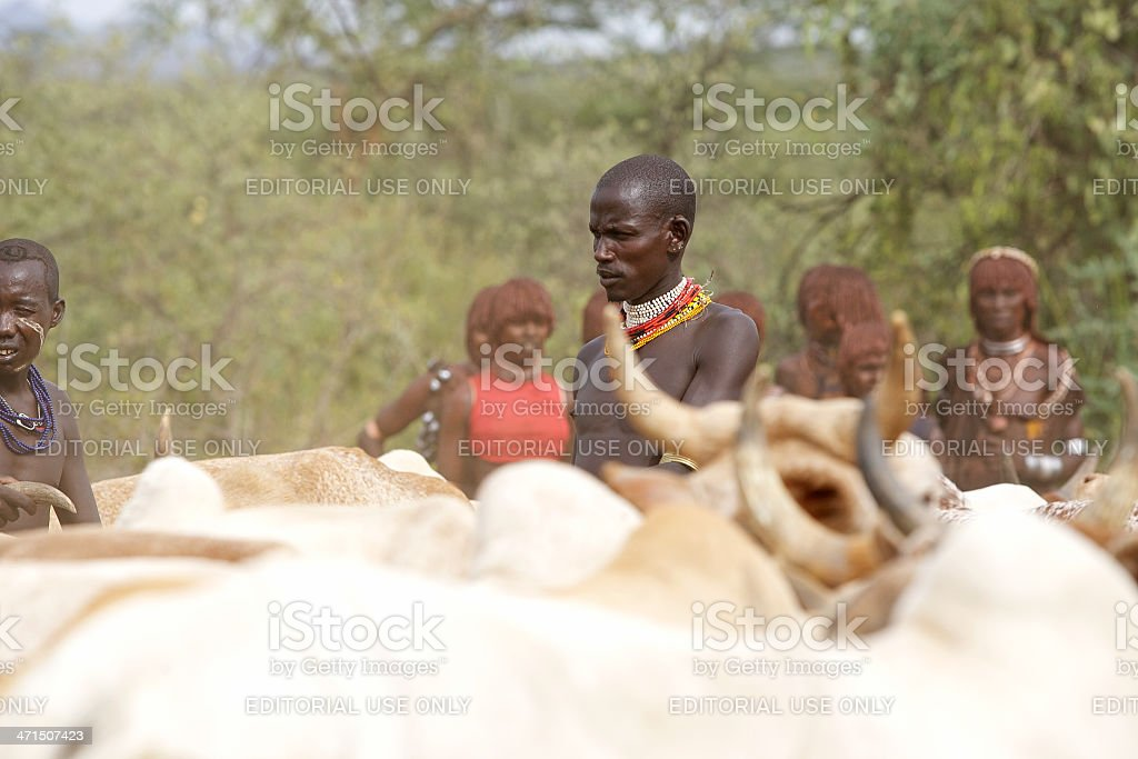 African man and cattle royalty-free stock photo