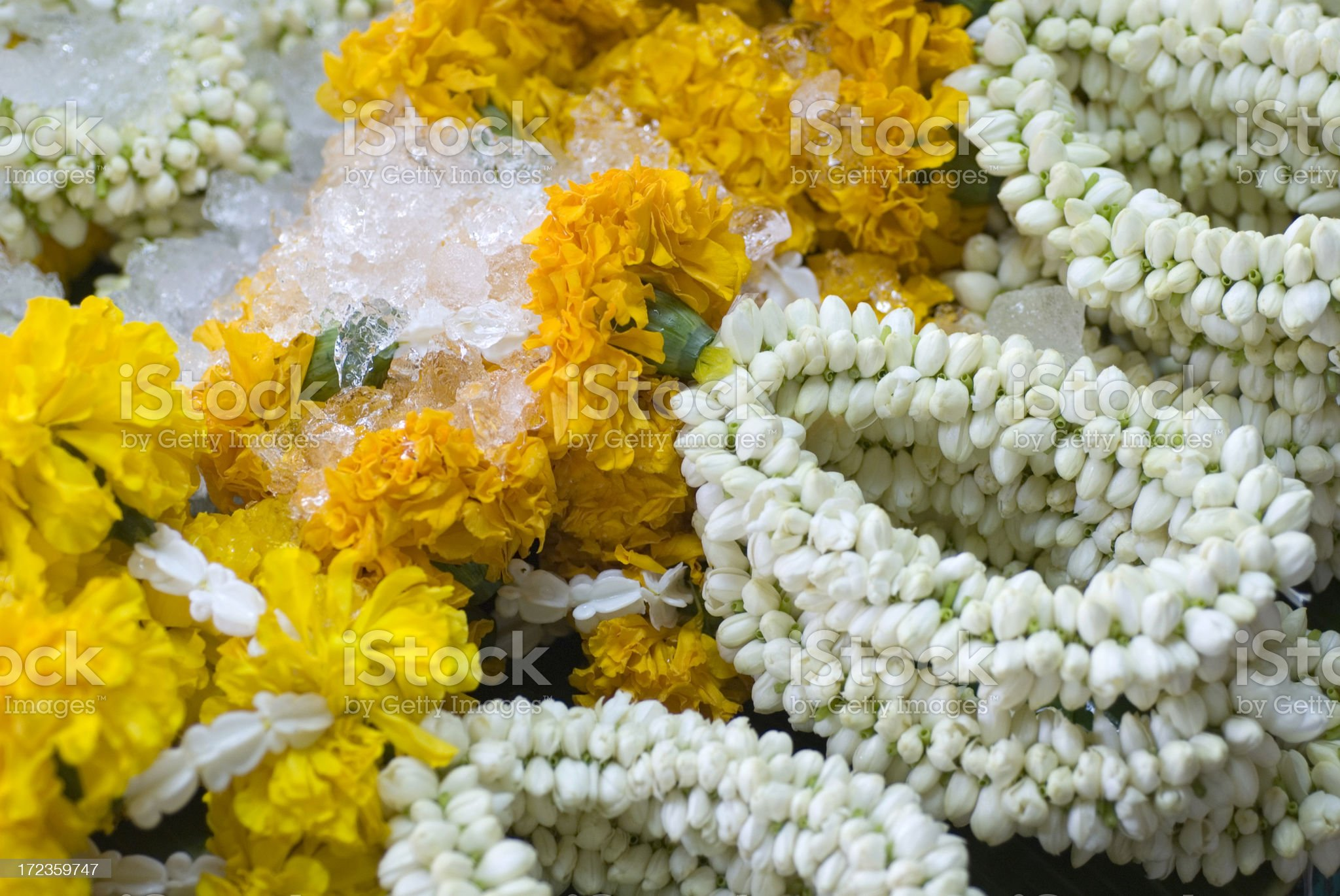 African marigolds and jasmin royalty-free stock photo