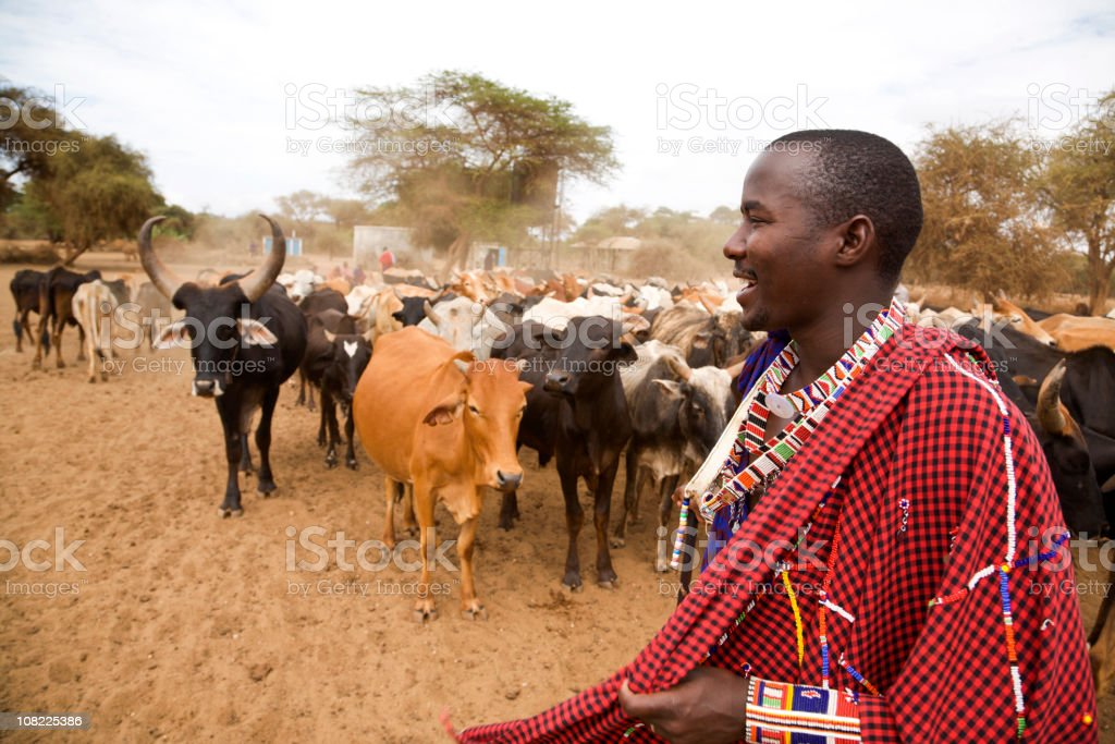 African Masai Man Smiling in Front of Cattle Herd, Kenya. stock photo