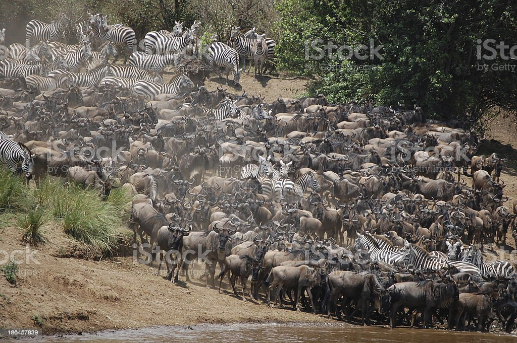 African Migration stock photo