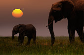 African Mother Elephant and baby - sunset