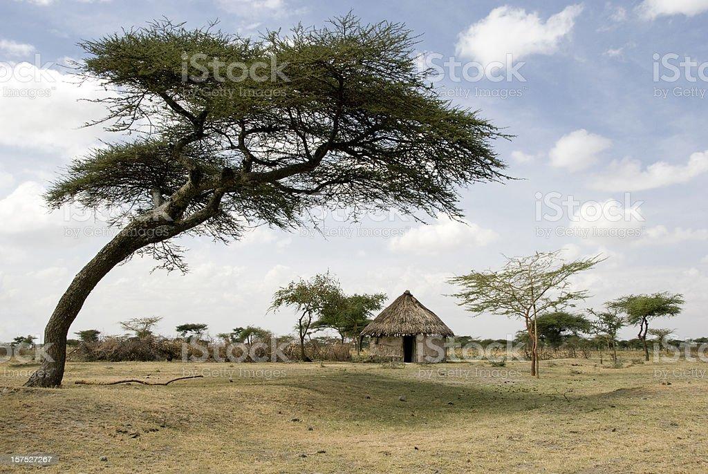 African mud hut under an acacia tree stock photo