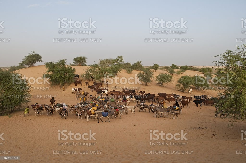 African nomads caravan setting off in the desert of Mali. stock photo