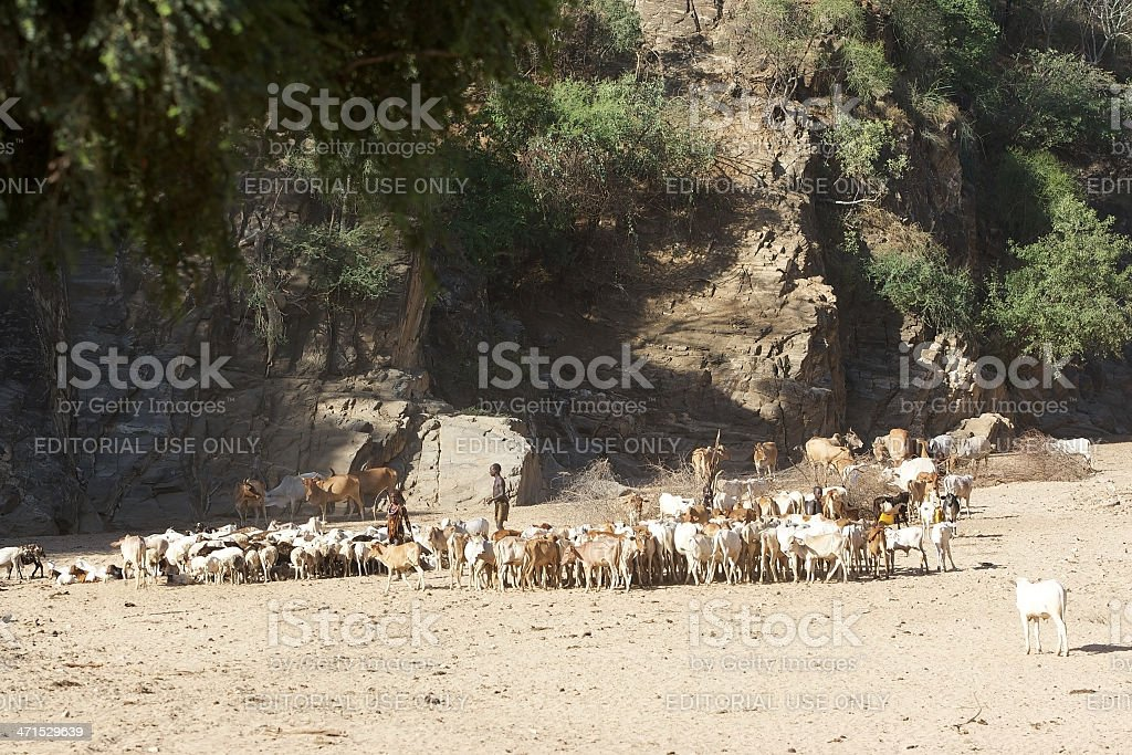 African people and cattle royalty-free stock photo