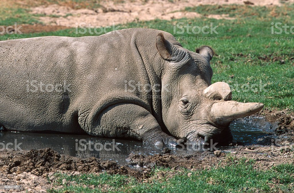 African Rhino royalty-free stock photo
