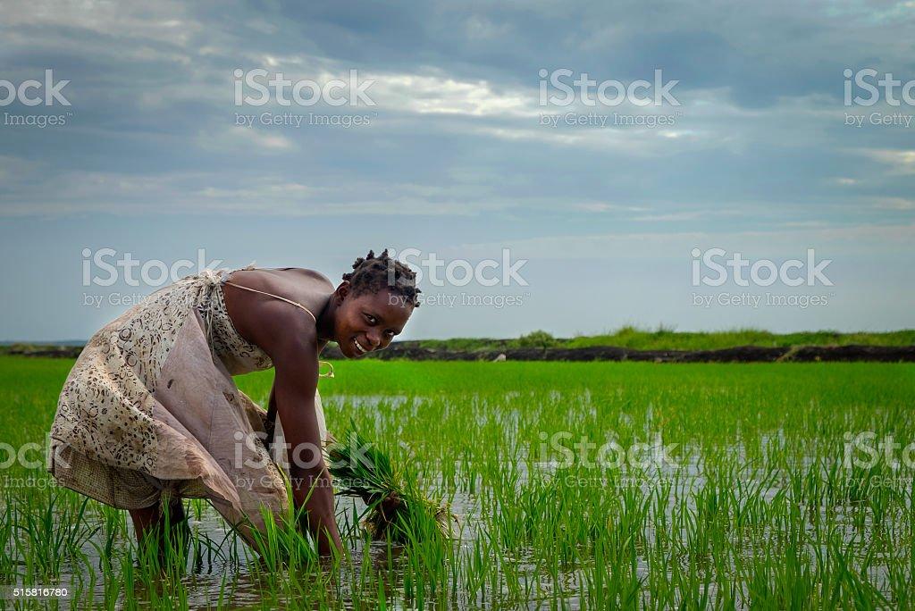 African Rice Farmer stock photo