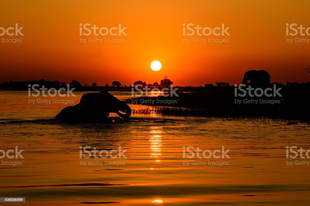 African Safari Sunset stock photo