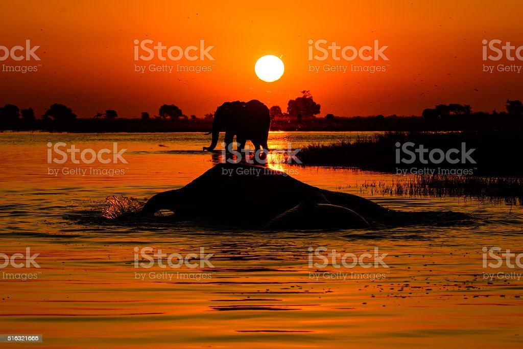 African safari sunset with silhouetted Elephants stock photo