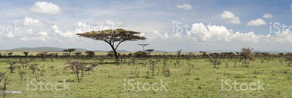 African Savanna Panorama stock photo