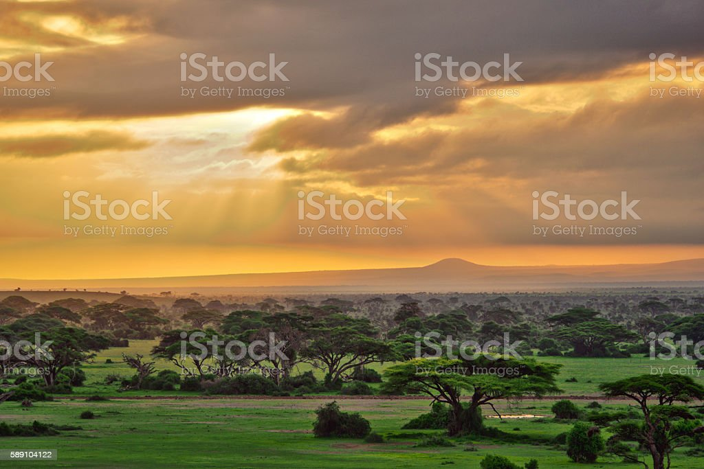 African savannah in Amboseli National Park stock photo