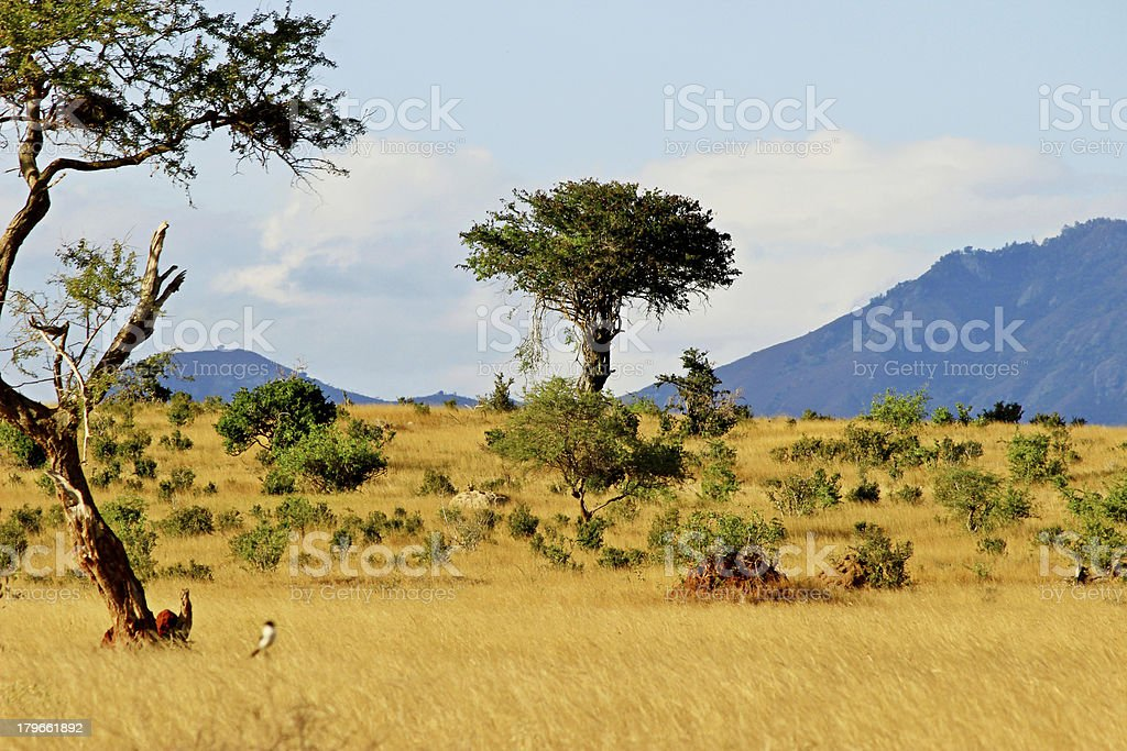 African savannah landscape stock photo