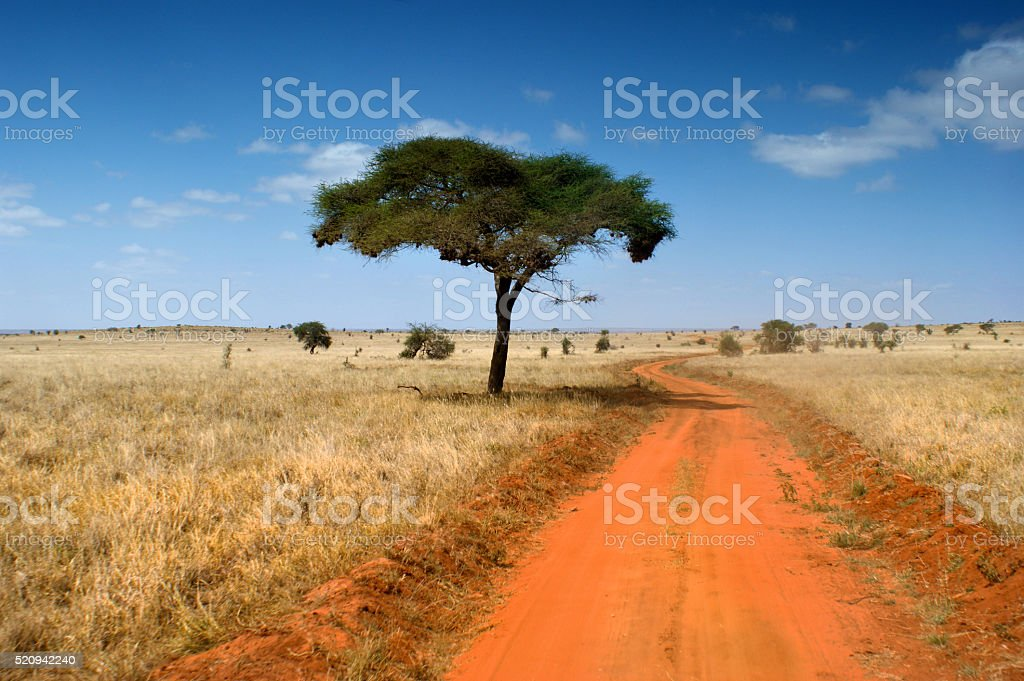 African Savannah stock photo