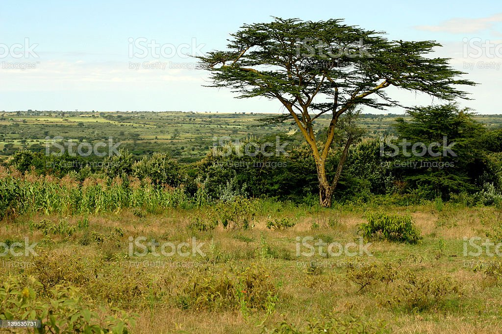 African Scenery royalty-free stock photo