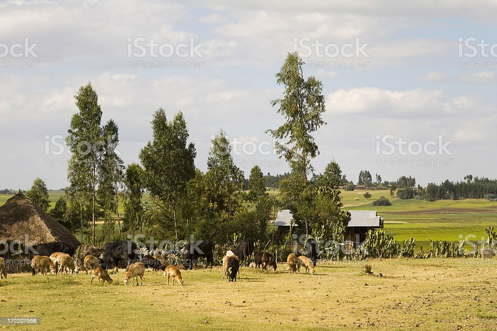 African small village stock photo