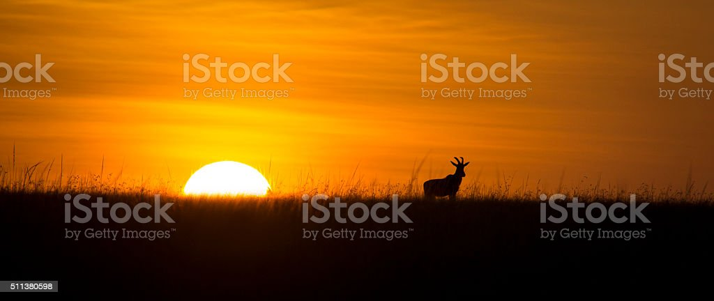 African sunrise stock photo