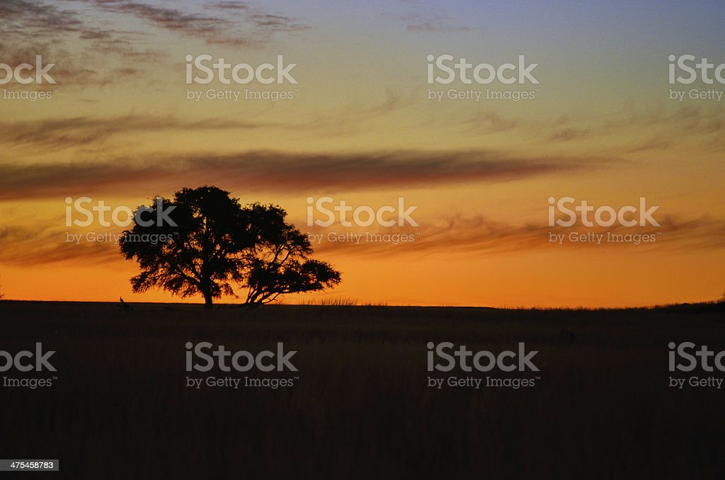 African sunset landscape stock photo