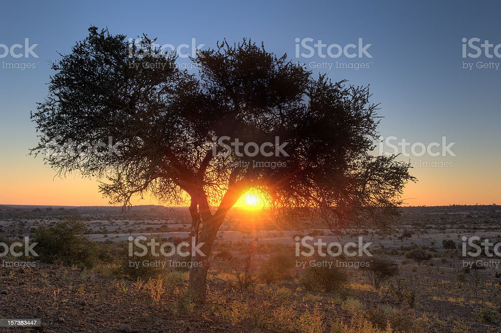African sunset under a tree in the savannah stock photo