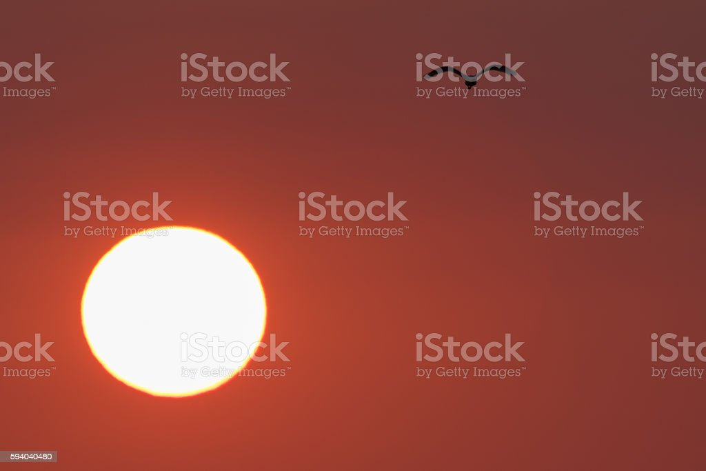 African sunset with bird silhouette stock photo