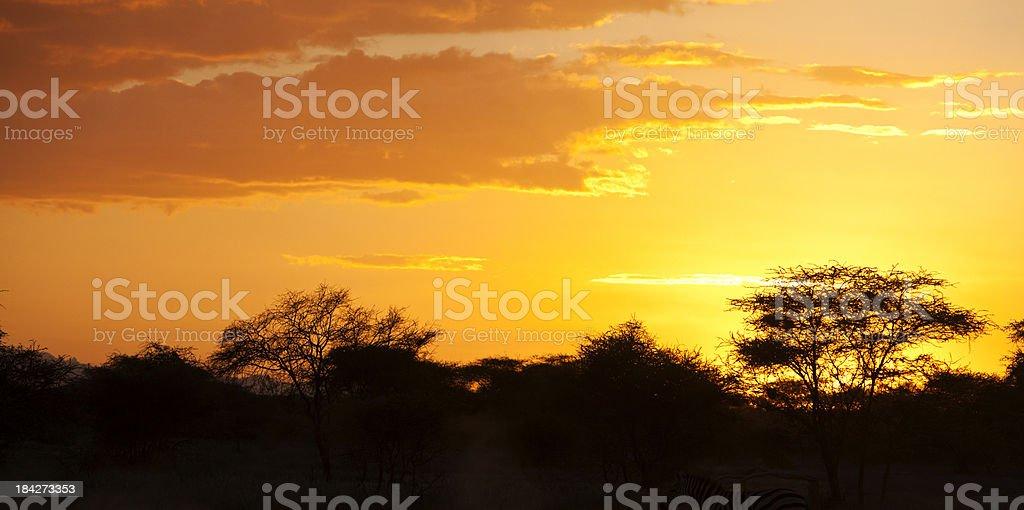 African sunset with thorn trees. Samburu Kenya stock photo