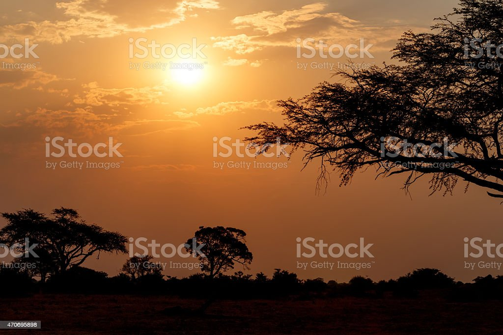 African sunset with tree in front stock photo