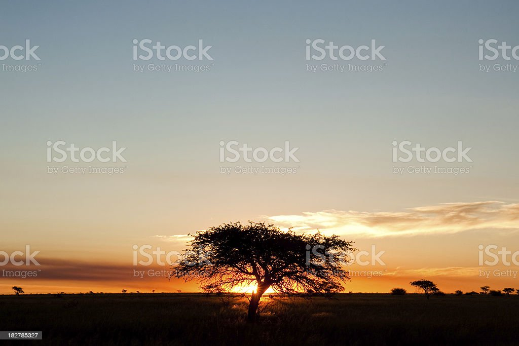 African sunset with tree stock photo