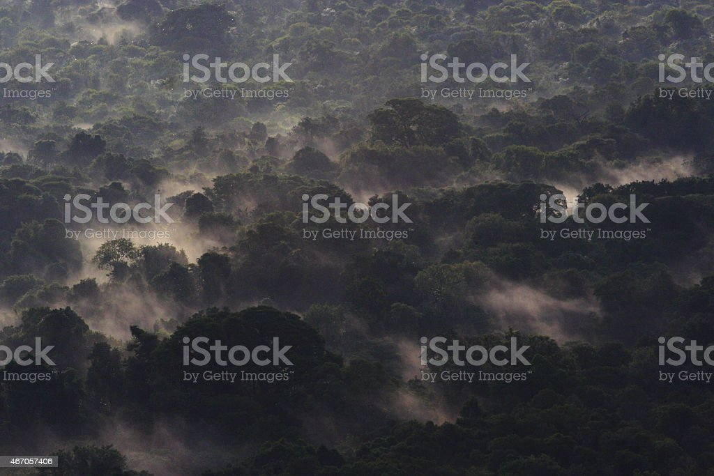 African tropical cloud forest stock photo
