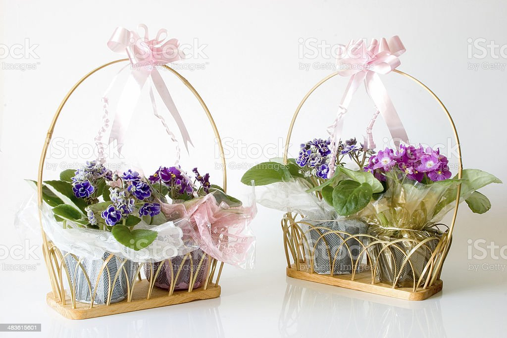 African Violets  - Basket gifts stock photo
