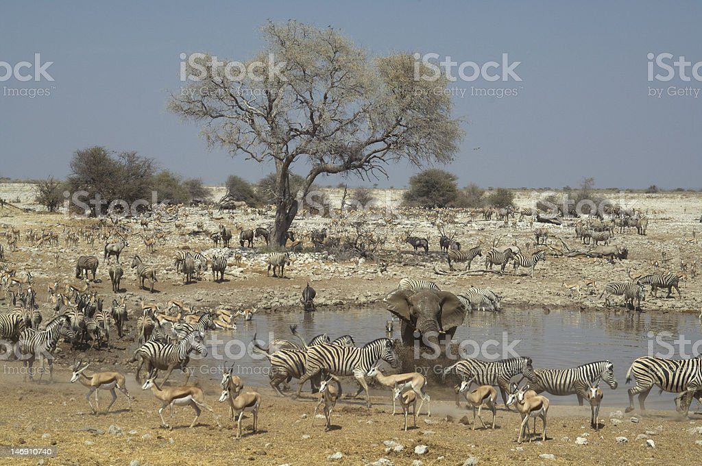 African waterhole stock photo