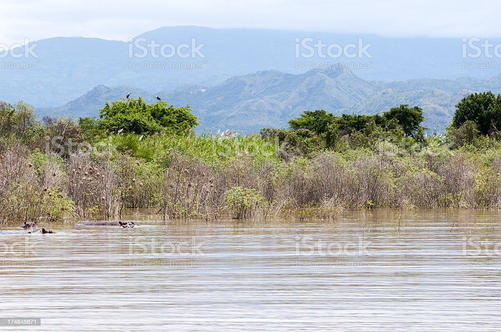 African wildlife and landscape on Lake Chamo stock photo