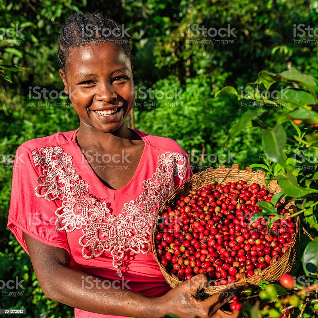 African woman holding basket full of coffee cherries, East Africa stock photo