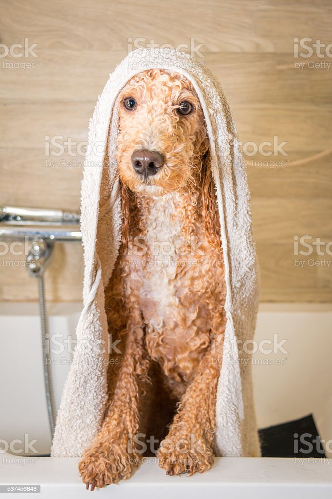 After a bath ! stock photo