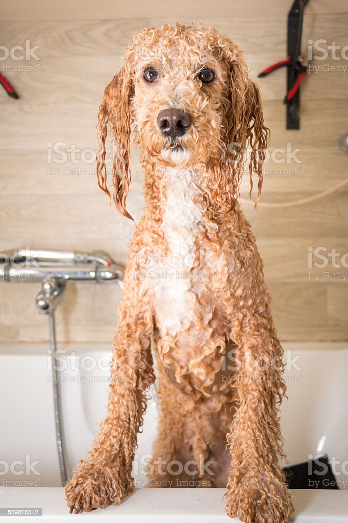 After a bath stock photo