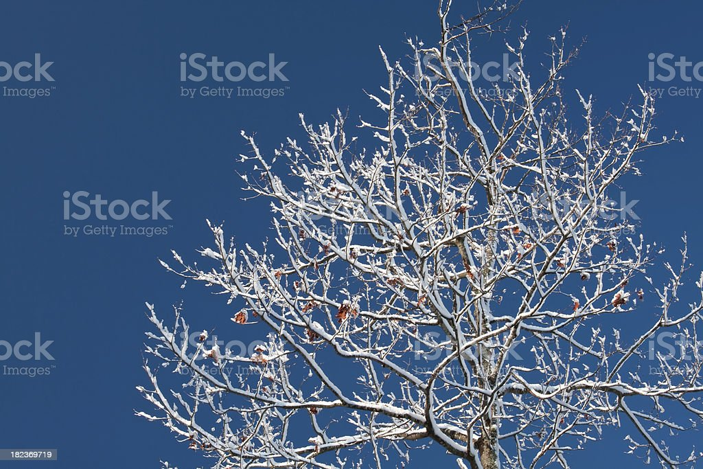 After a fresh winter storm royalty-free stock photo