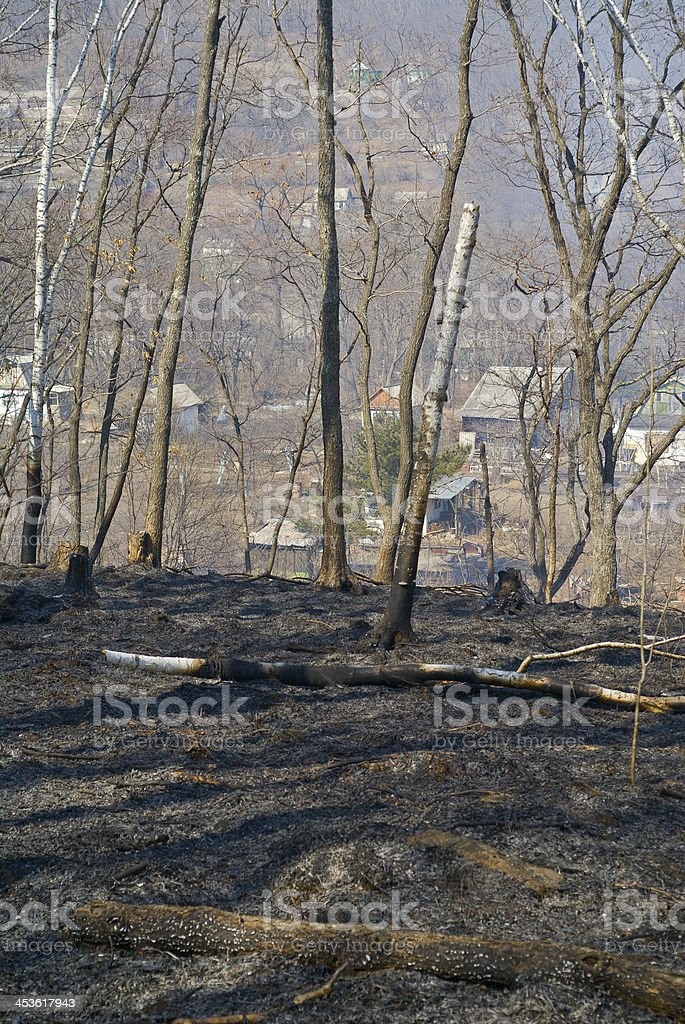 After forest fire royalty-free stock photo