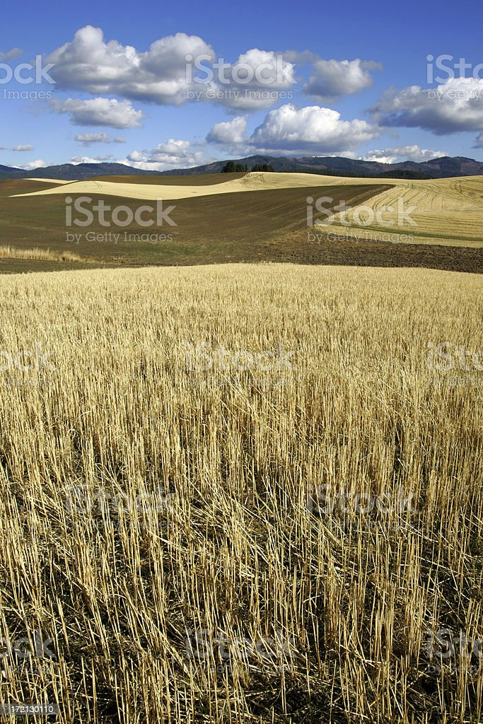 After Harvest ( vertical ) royalty-free stock photo