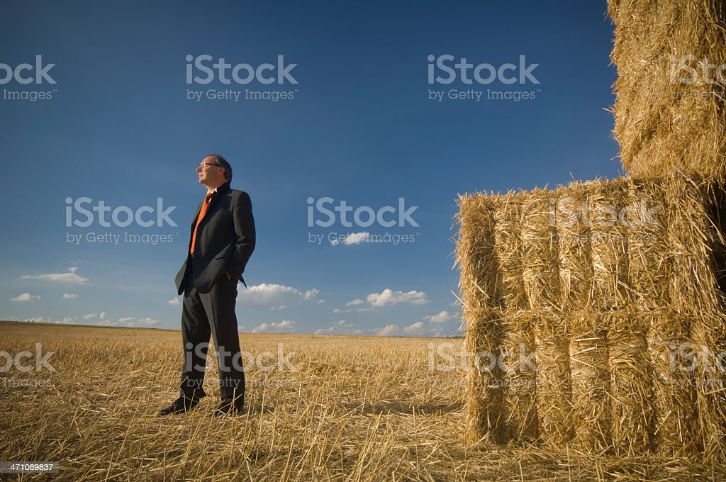 After harvest royalty-free stock photo