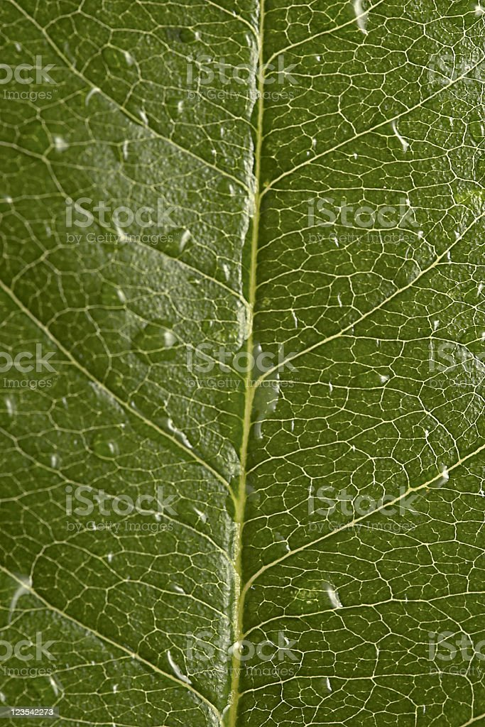 After rain - raindrops on leaf royalty-free stock photo