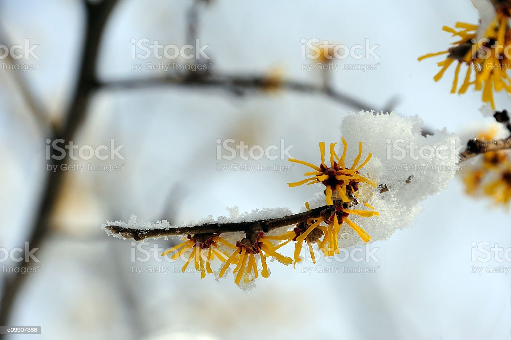 After snow storm in New England stock photo