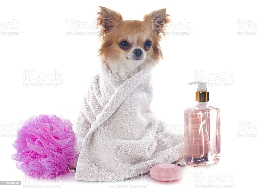 after the bath royalty-free stock photo