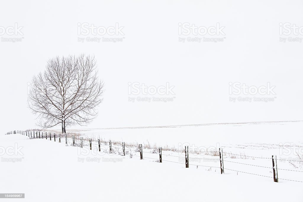 After the Blizzard royalty-free stock photo