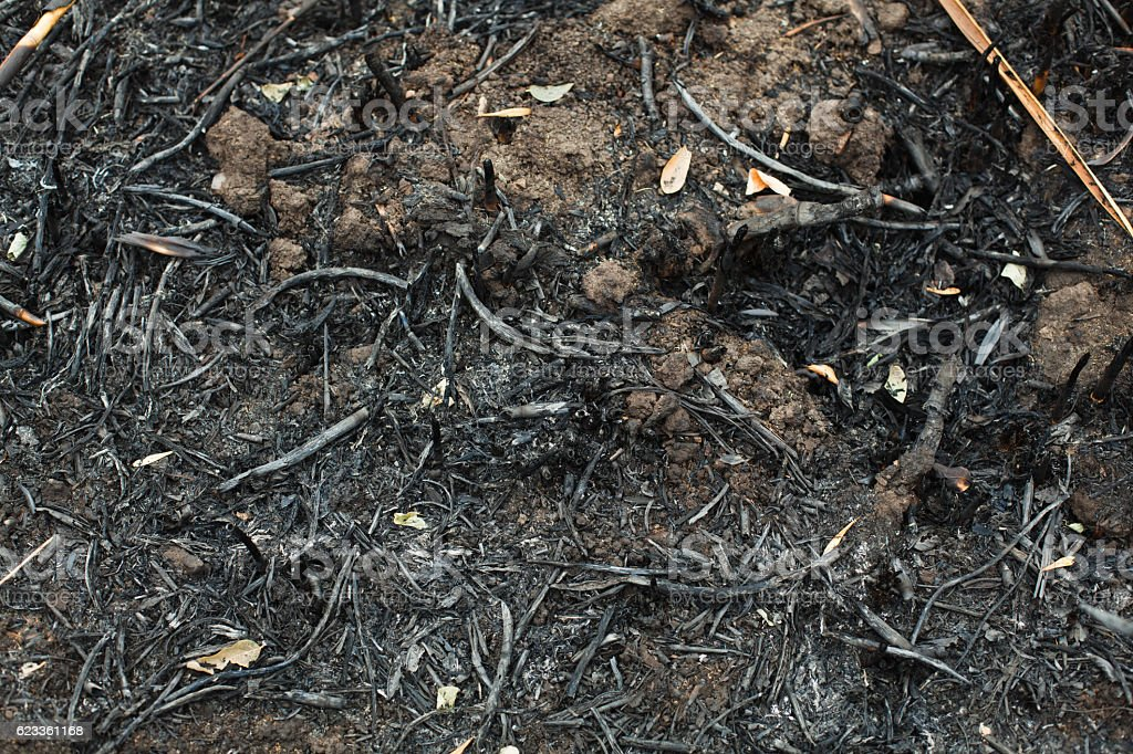 after the burnt ashes of reeds stock photo