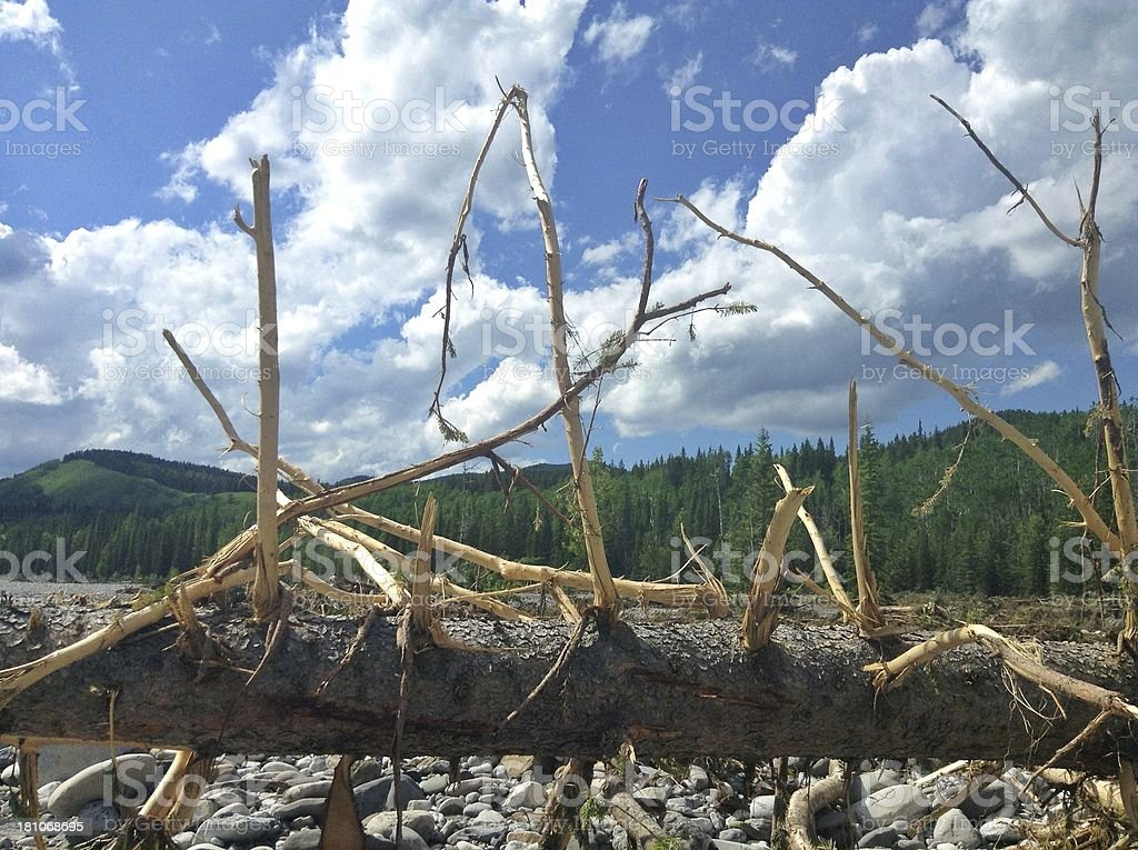After the flood royalty-free stock photo