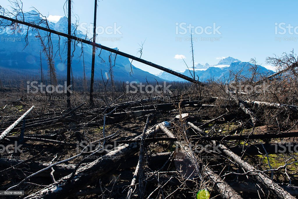 after the forest fire stock photo