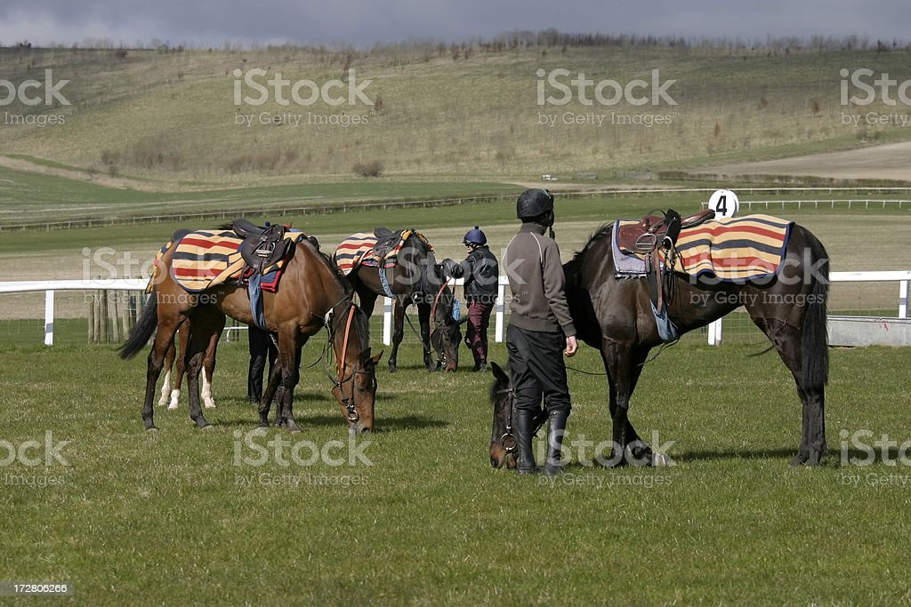 After the Gallops royalty-free stock photo