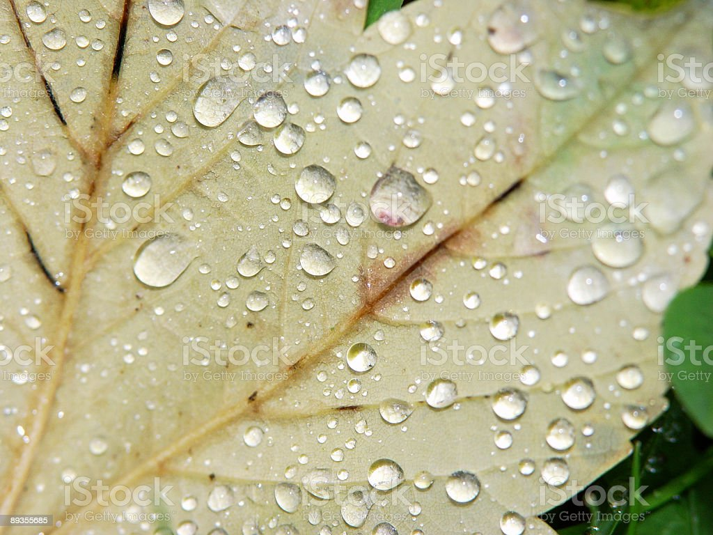 after the rain royalty-free stock photo
