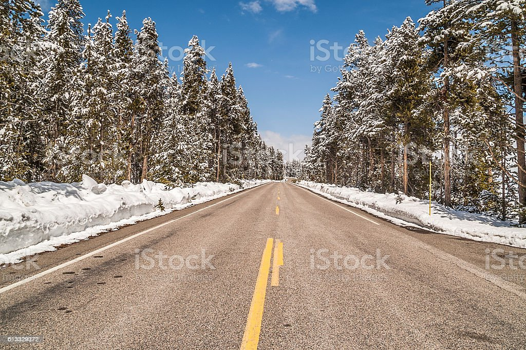 After the Snow Showers in Yellowstone stock photo