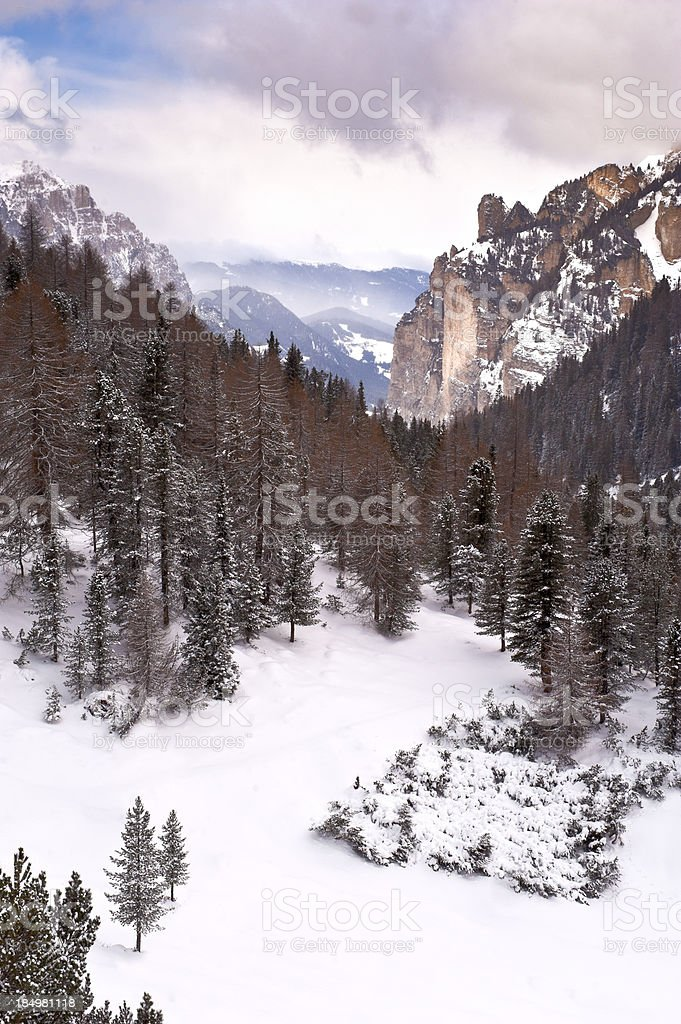 After the snowfall.. royalty-free stock photo