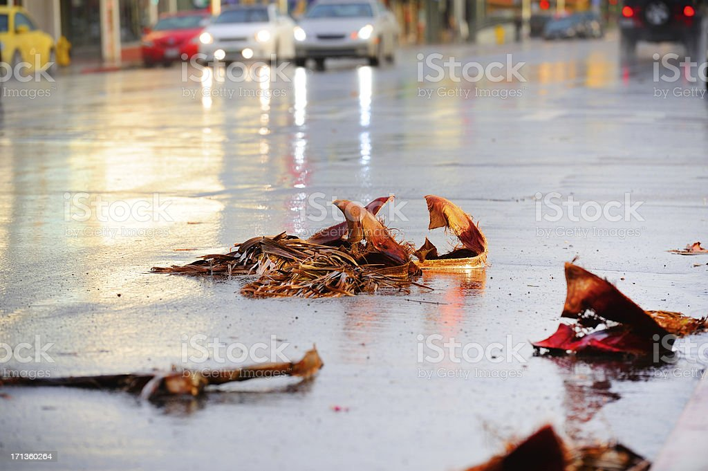 After the storm, debris on rain wet street royalty-free stock photo